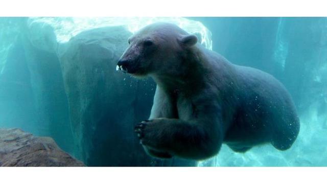 polar.jpg