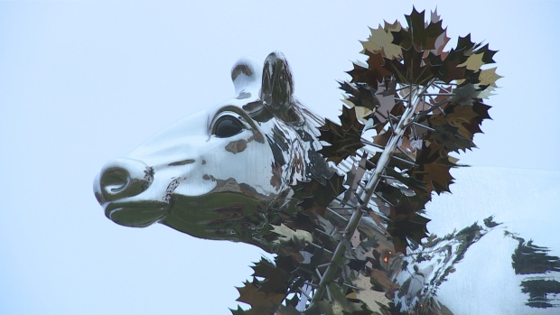 markham-cow-2.jpg