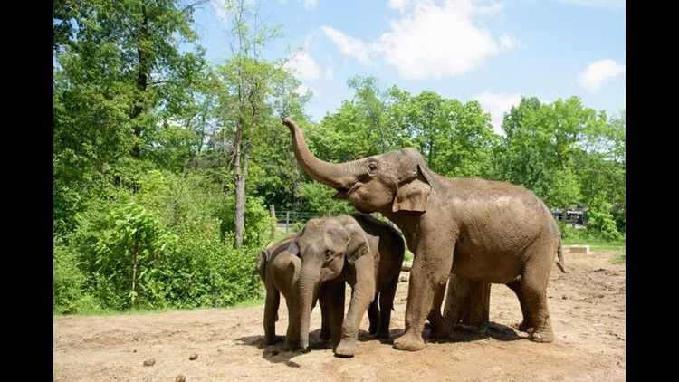 elephant 1_1519503537034.jpg_13264066_ver1.0.jpg