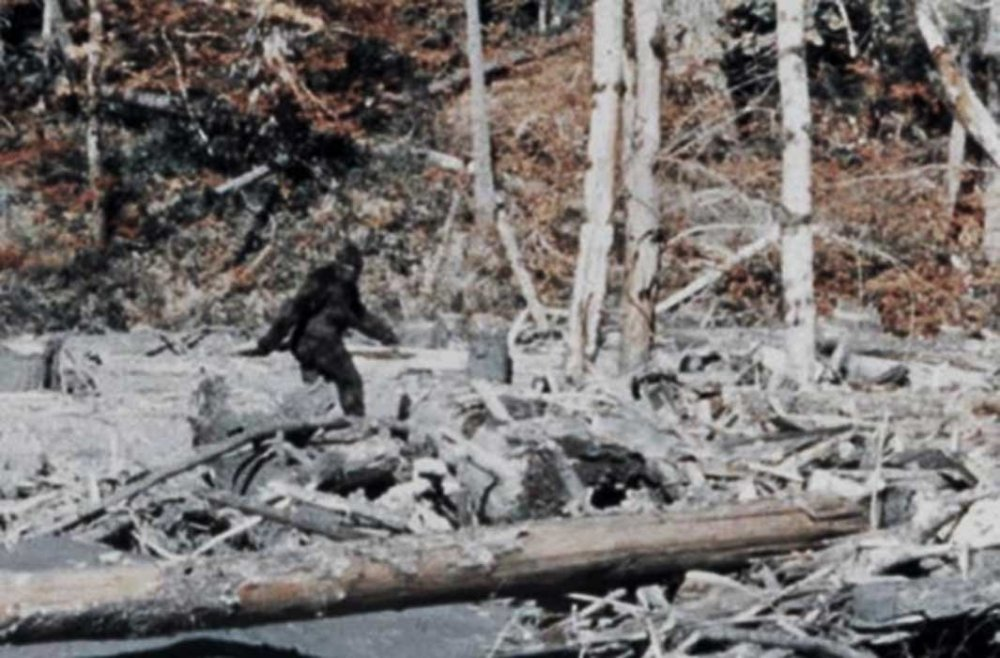 the-Patterson-Gimlin-Bigfoot-Film.jpg