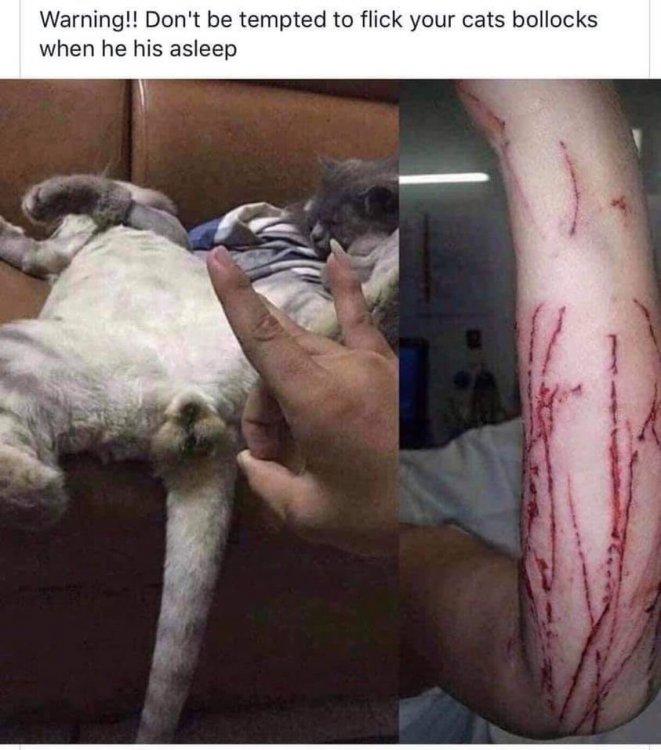 Cat Bollocks.jpg