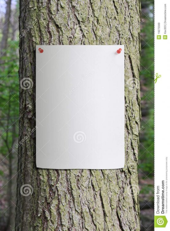 tree-trunk-paper-poster-pinned-to-19275569.jpg